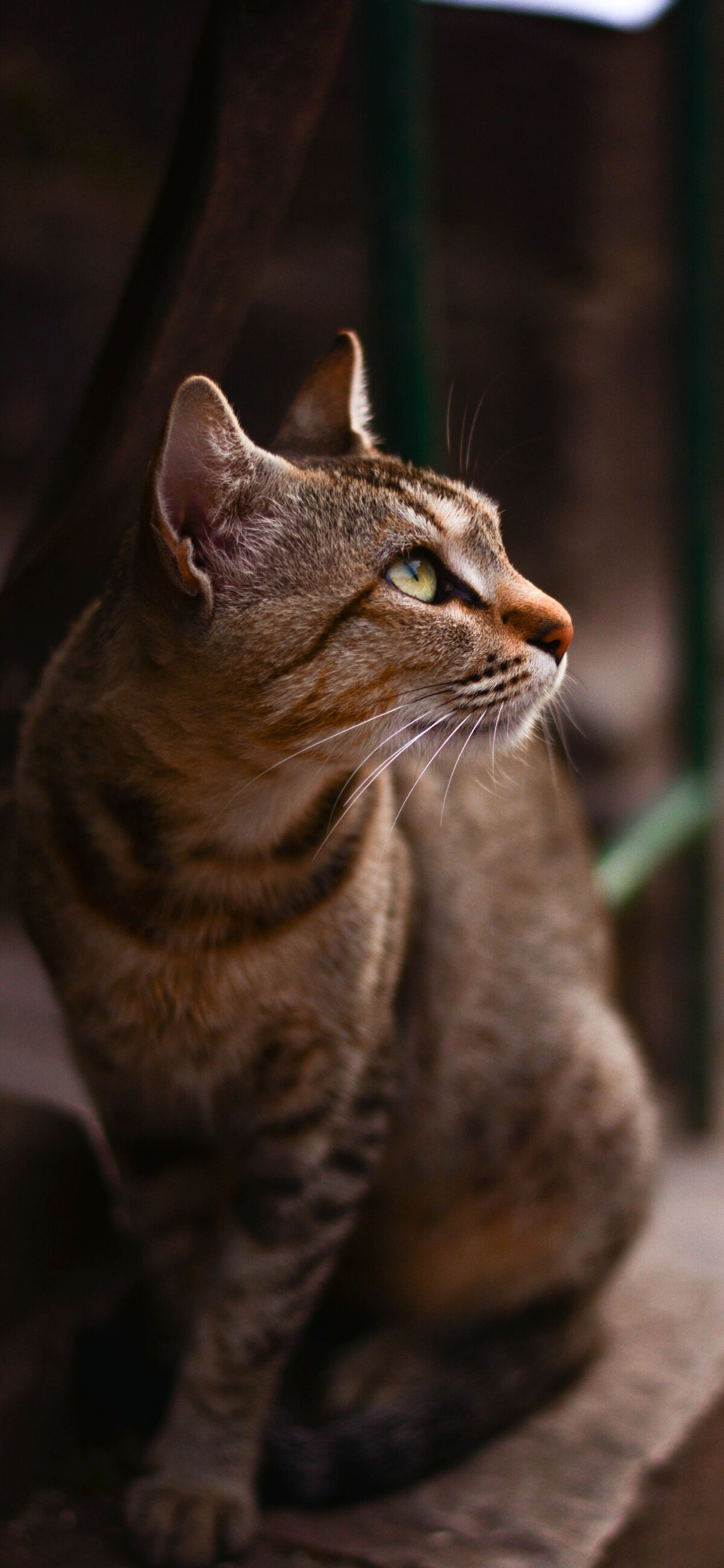 8 Cute Cat iPhone Wallpapers #iphonelockscreen