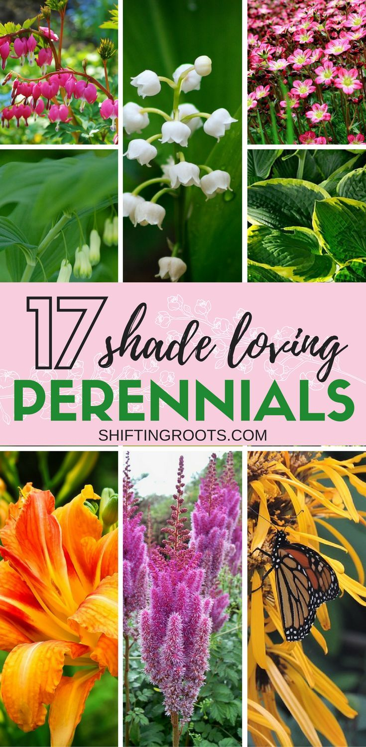 17 Perennial Flowers That Love Shade Gardens Plants And Landscaping