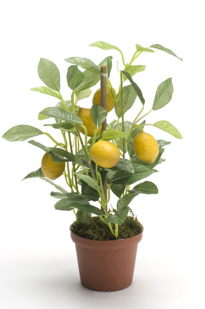 Citronnier Artificiel En Pot H 25 Cm Du Site Artificielles Com Jardinage En Pots Faire Pousser Un Citronnier Jardinage