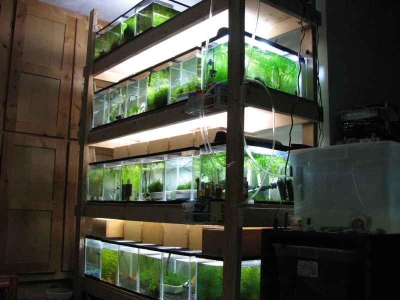 Fish tank 2x4 racks properly constructed wooden shelves for Fish tank rack