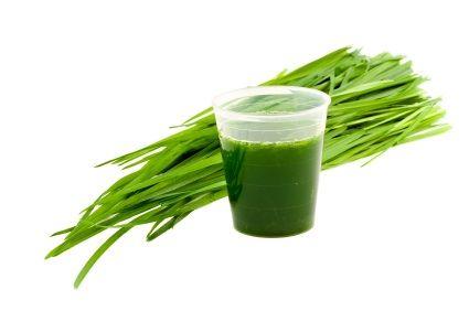 Spotlight on barley grass: why it's a healthy habit worth having!
