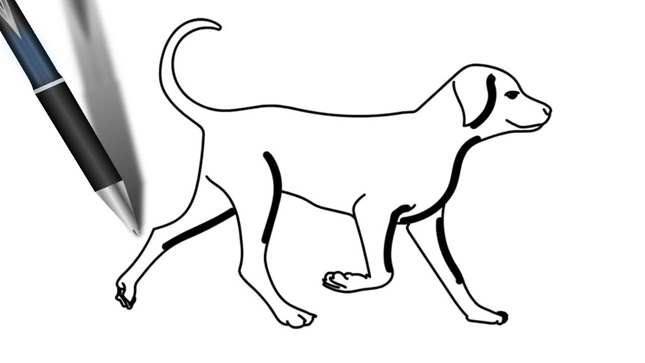 Dog Step By Step Drawing Easy Drawings Easy Drawing Steps Step By Step Drawing