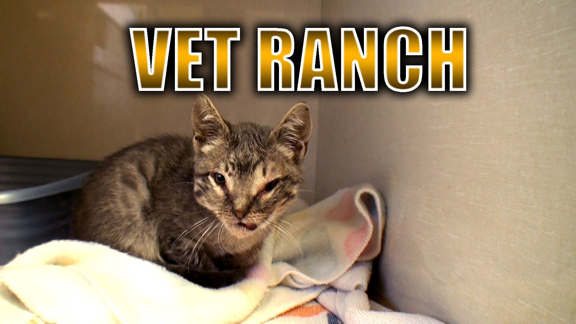 Severely Injured Kitten Gets A Second Chance Kitten Funny Dog Videos Cat Gif
