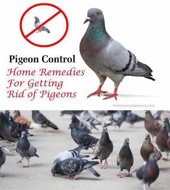 Pin On Rapid Pest Control