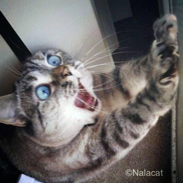 famous-internet-cats-2  605