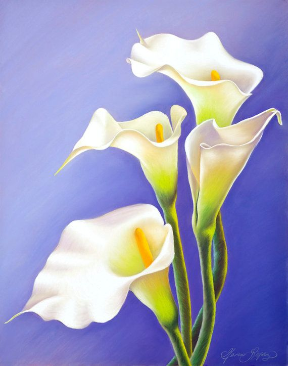 Pin On Calla Lilies