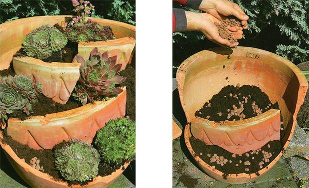 hauswurz sempervivum garten garten hauswurz und steingarten. Black Bedroom Furniture Sets. Home Design Ideas