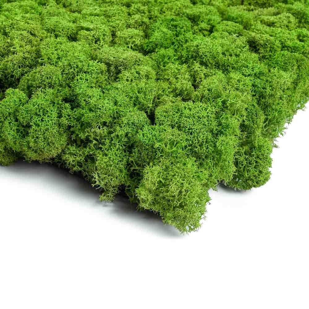 Living Wall Moss Tile Green 16x24 Close Up