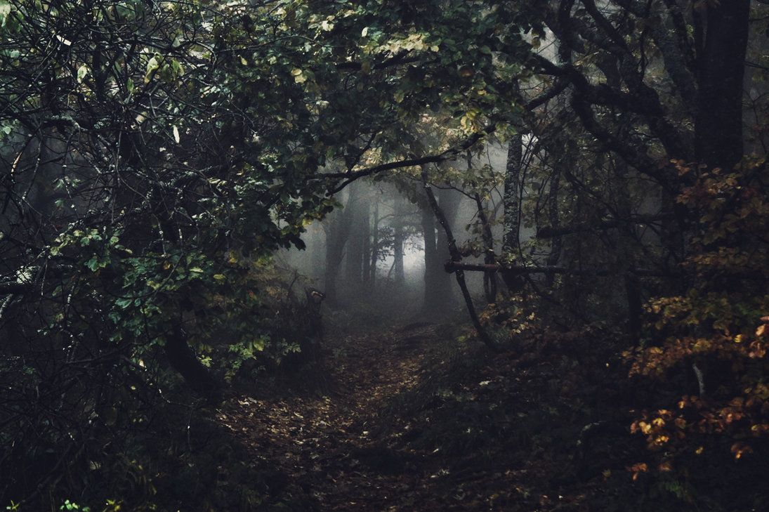 "childoftheancientforest: "" Dark passage by kriskeleris "" #overgrownaesthetic"