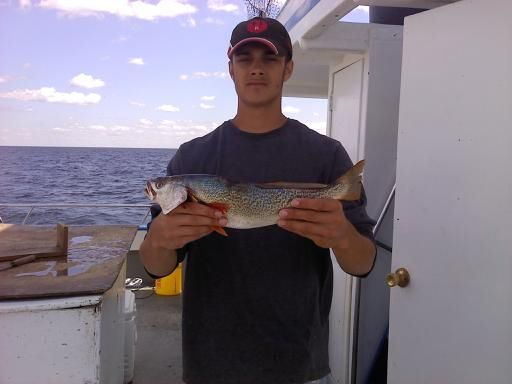 Weakfish in the long island sound fishing pinterest for Long island sound fishing