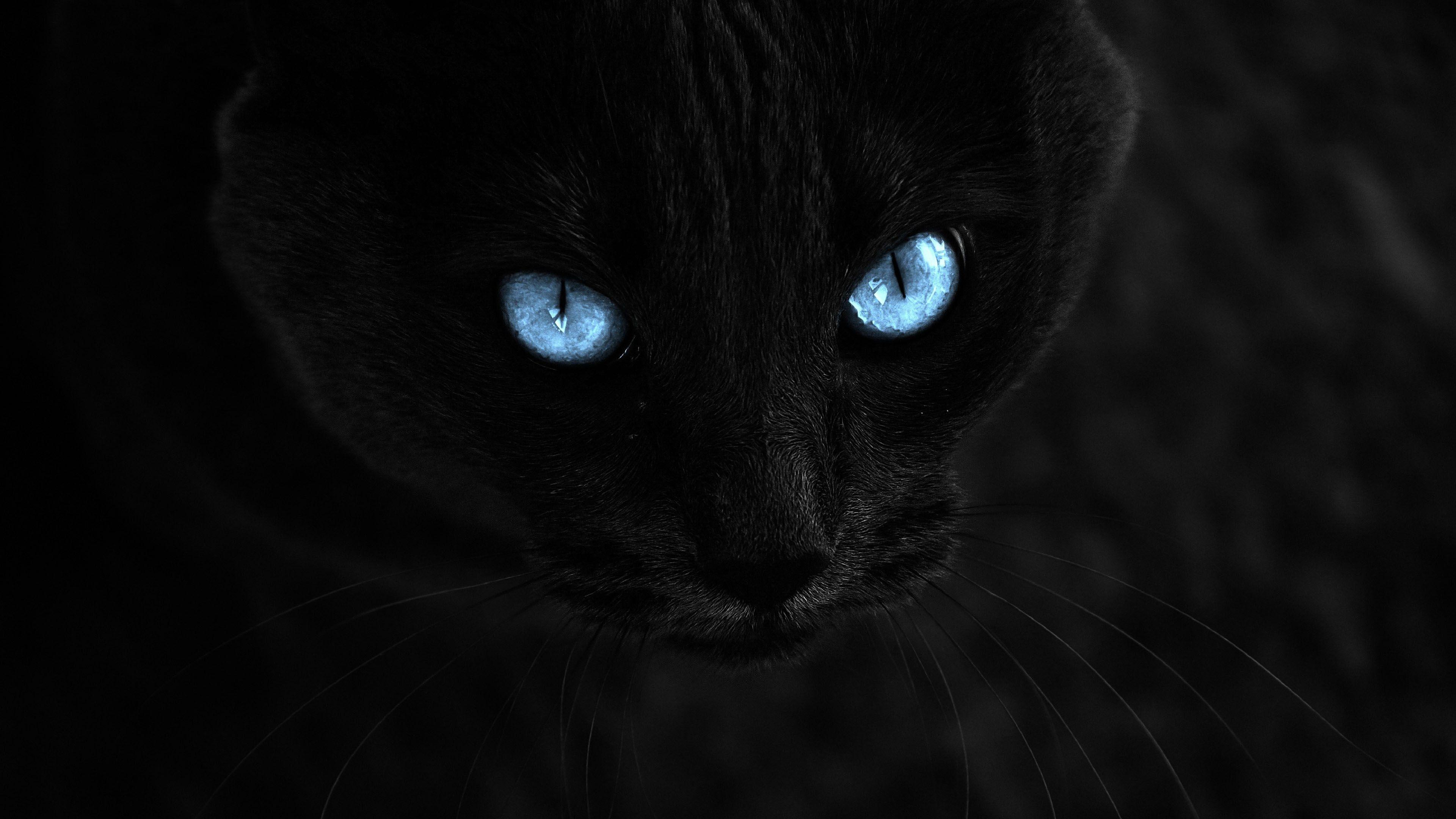 Mavi Gozlu Kara Kedi Harika Duvar Kagidi Cat With Blue Eyes Cat Wallpaper Black Cat