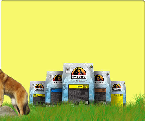Offering Healthy And Holistic Dog Cat And Ferret Food Wysong Has