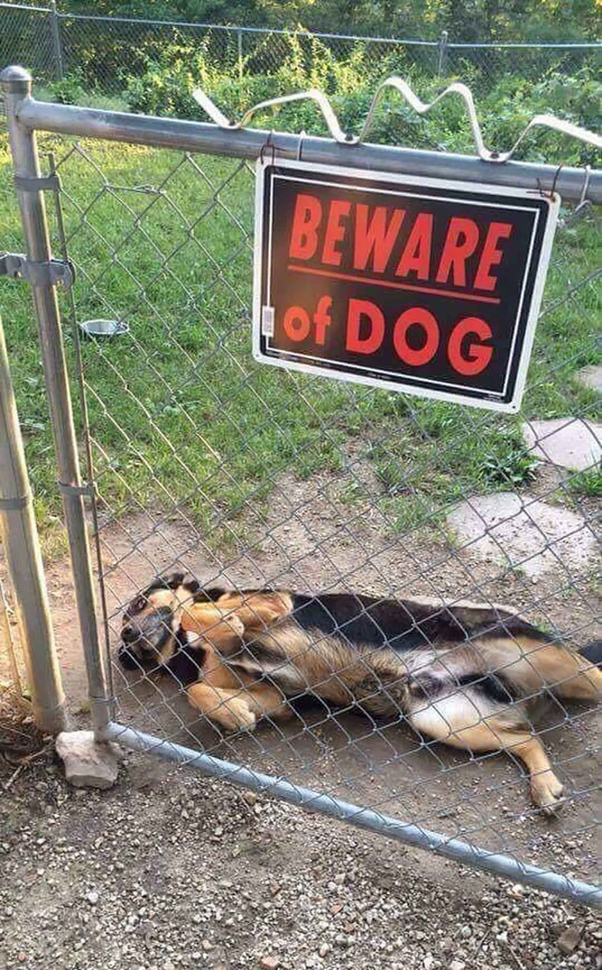 Ferocious Dogs Posing Beside Their Beware Of Dog Signs - 18 ferocious dogs posing beside their beware of dog signs