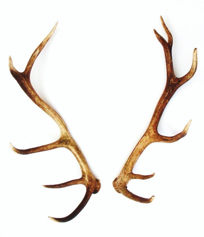antlers-no466__32444_zoom.JPG (861×1000) | Anatomy Ref: Animals(mix ...