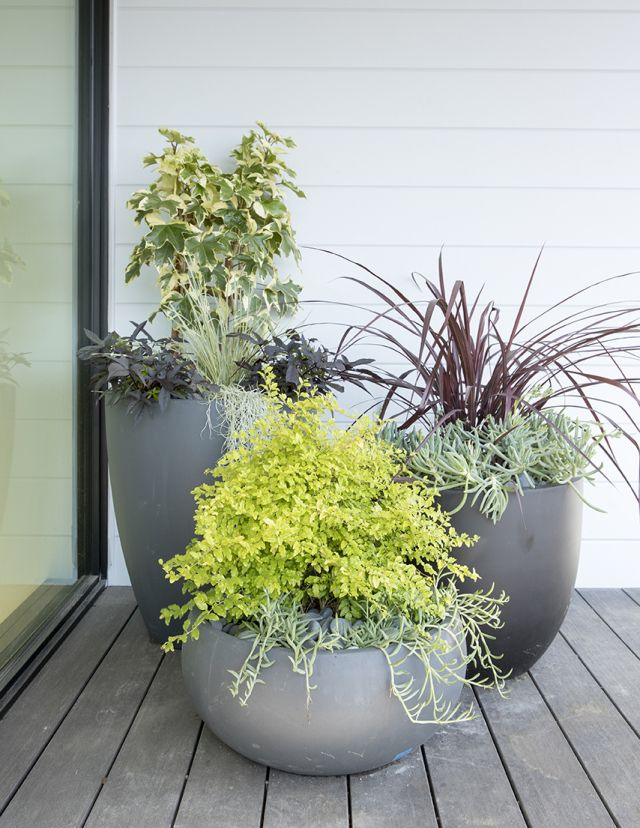 4 Fuss Free Container Planting Ideas Potted Plants Patio