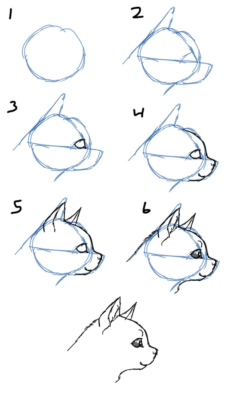 how to draw how to draw cat faces heads side view art