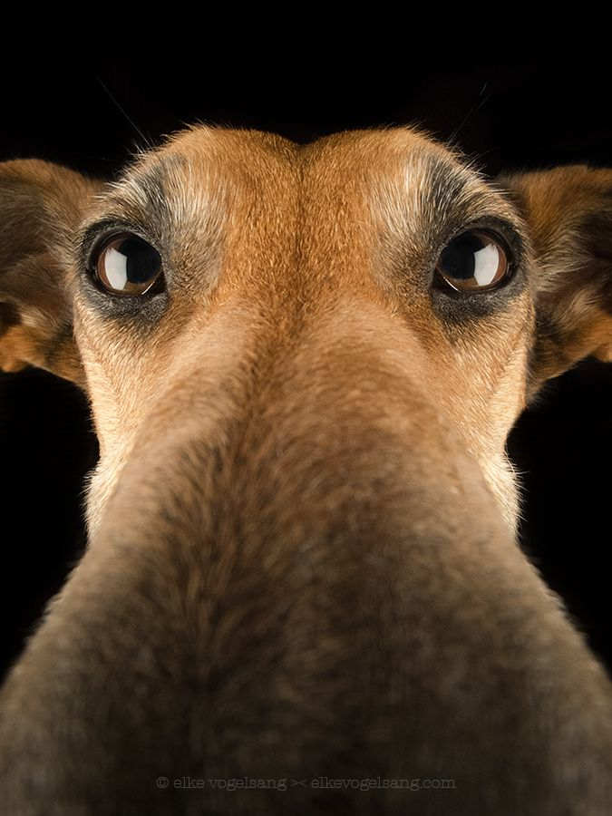 Funny Dog S Noses Up Close Pictures