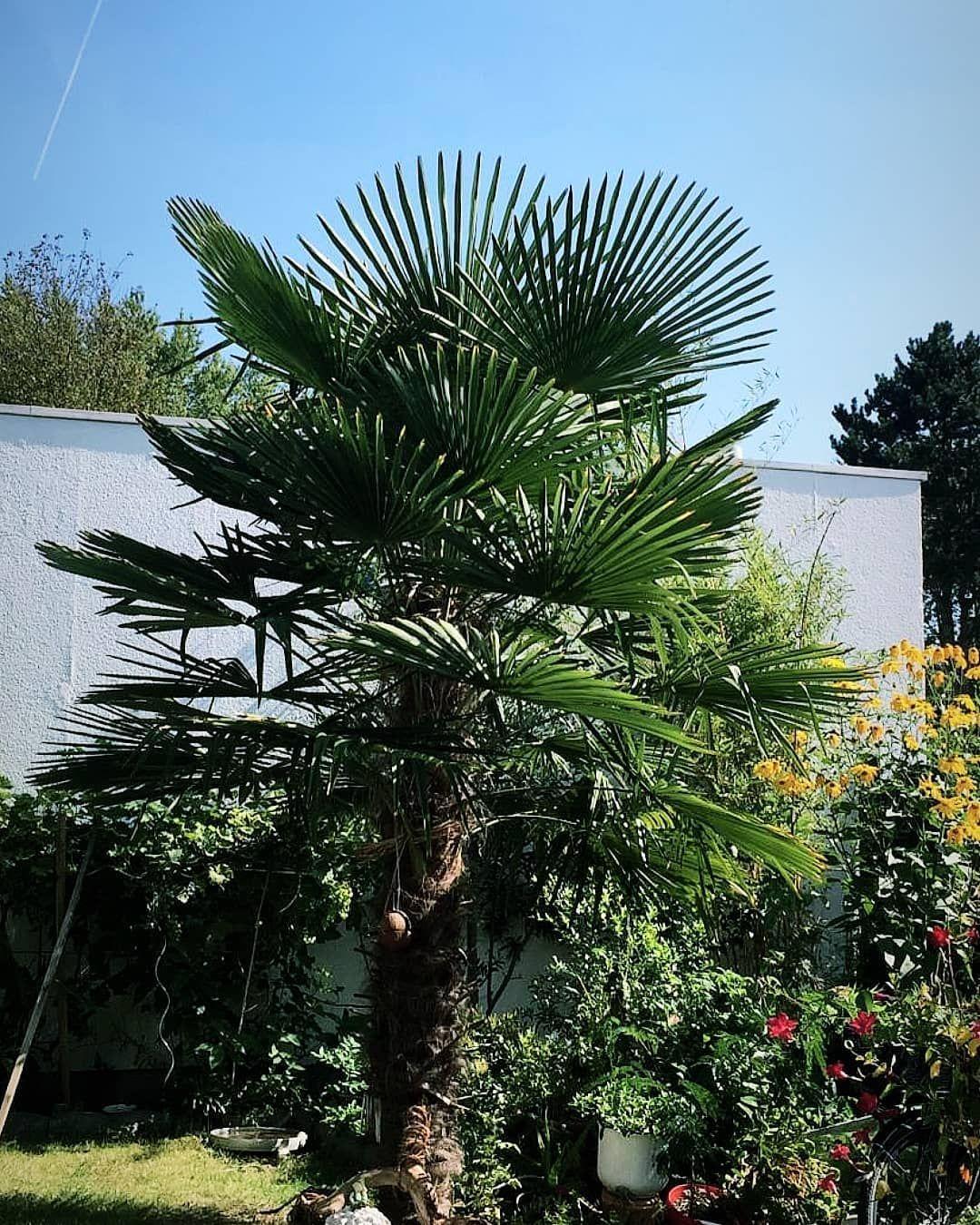 Mama S Garten Palmen Gartengestaltung Garten Sommer Gartenideen Green Nature Gartengestaltung Garten Ideen Garten
