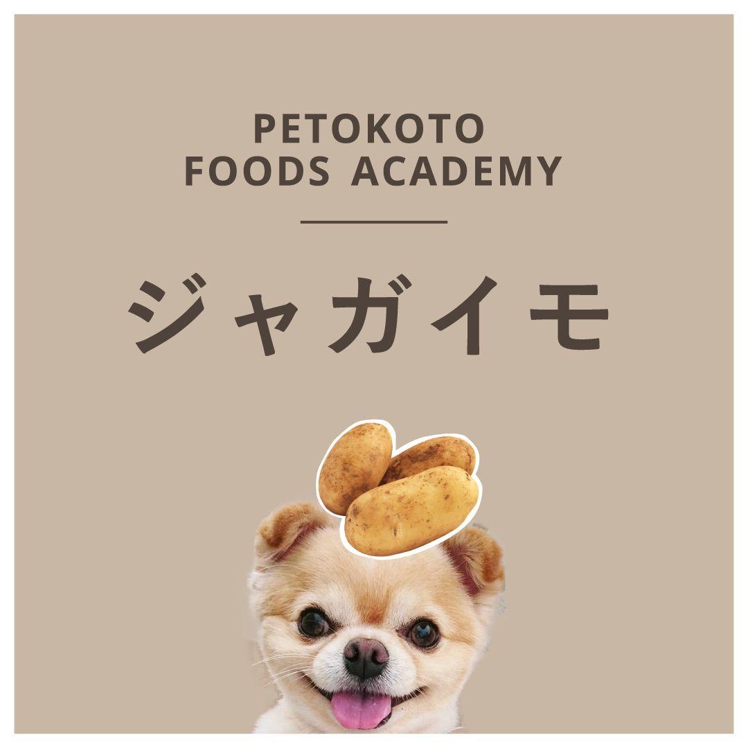 犬はじゃがいもを食べて大丈夫 芽などの注意点やレシピを紹介 犬 ドッグフード 獣医
