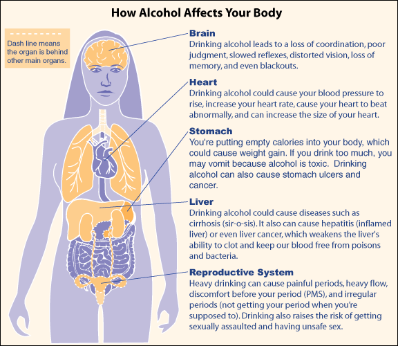 Alcohol Affects Every Organ In A Womans Body Brain Heart Stomach