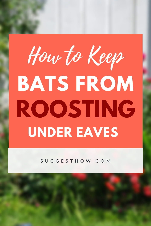 19 Home Remedies And Bat Repellents To Get Rid Of Bats