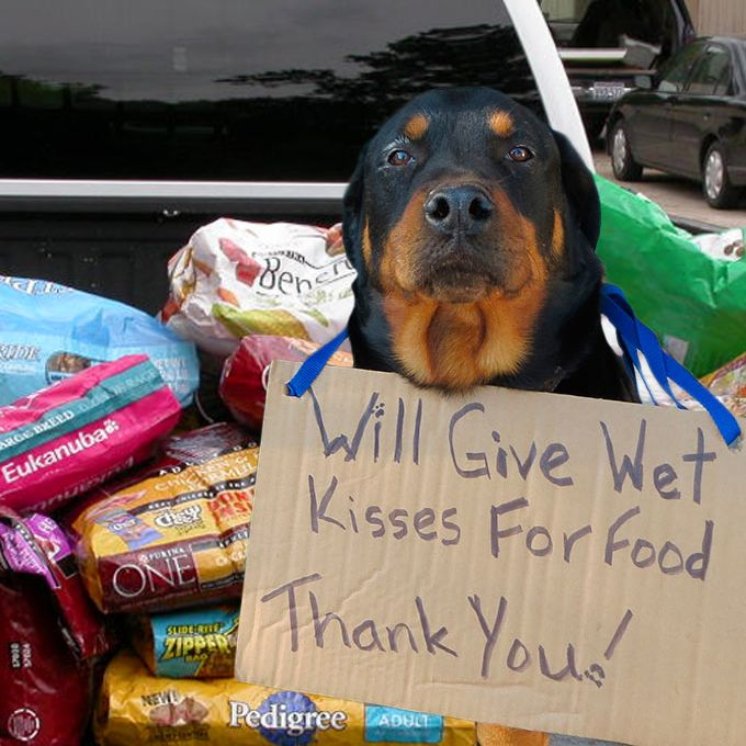 Pallets Of Pet Food For American Shelters Animal Rescue Site