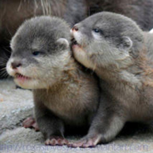 Newborn otter pups