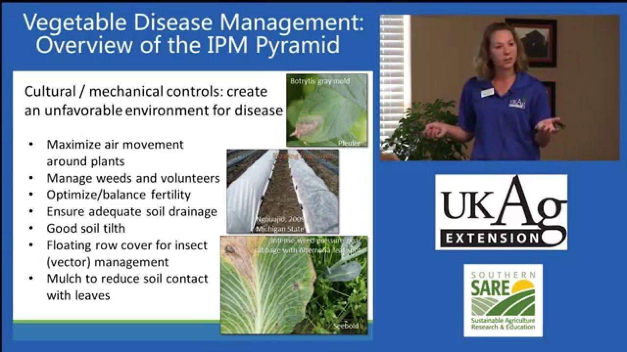 Emily Pfeufer Extension Plant Pathologist At The University Of