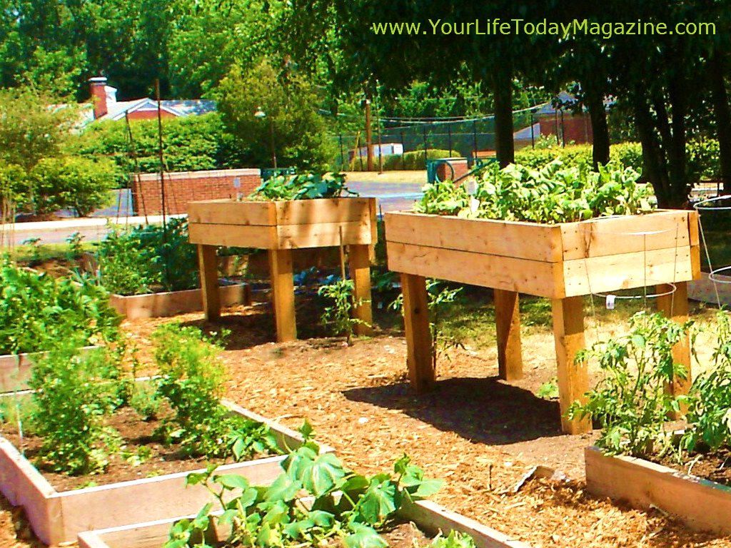 garden beds raised best bed cedar kit ideas gardening elevated