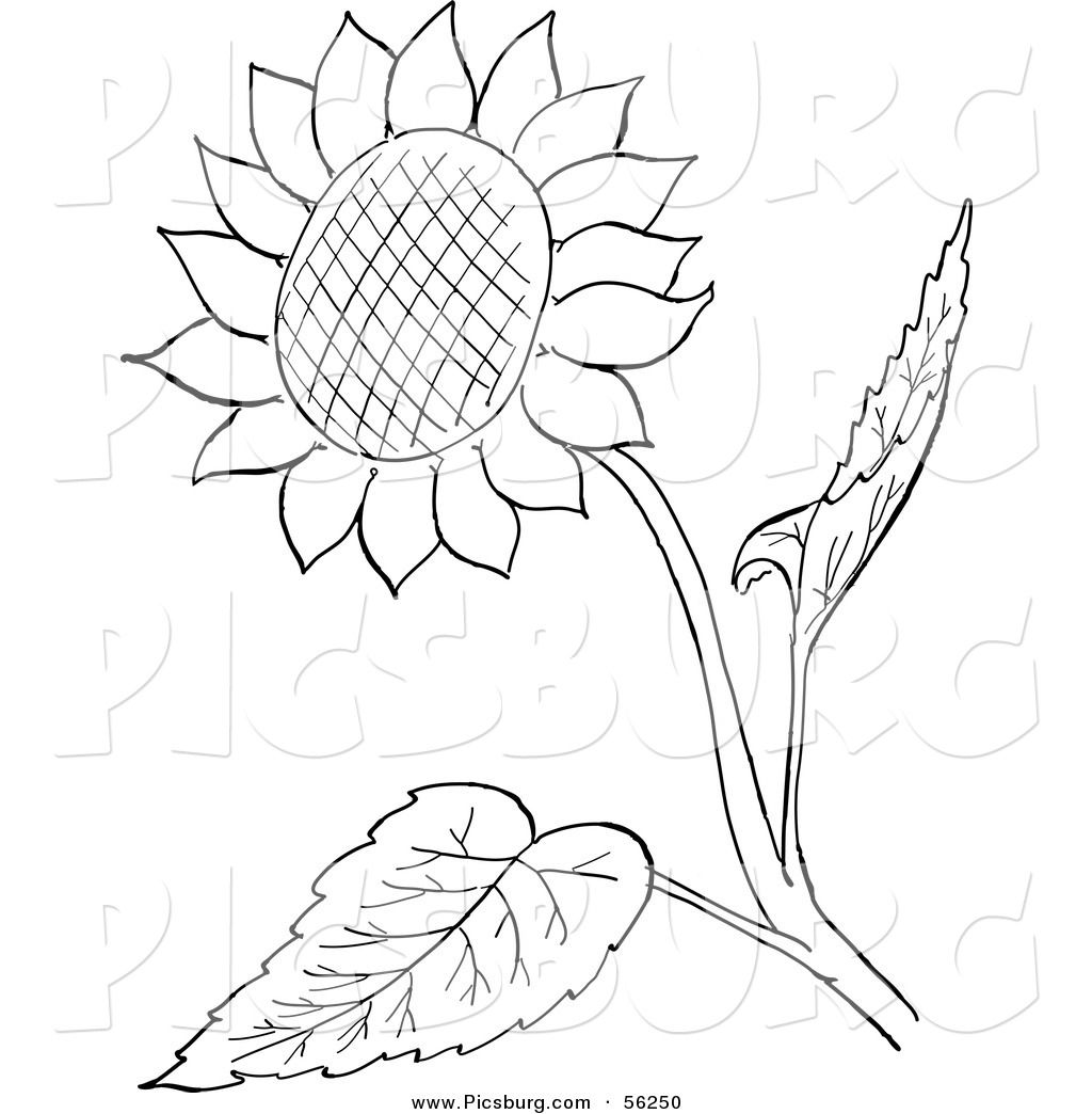 Line Drawing Sunflower : Clip art of a sunflower and leaves black white line