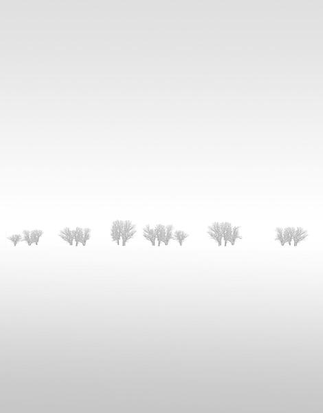 Winter Trees 13 1/6 - Michael Fain   Ann Korologos Gallery