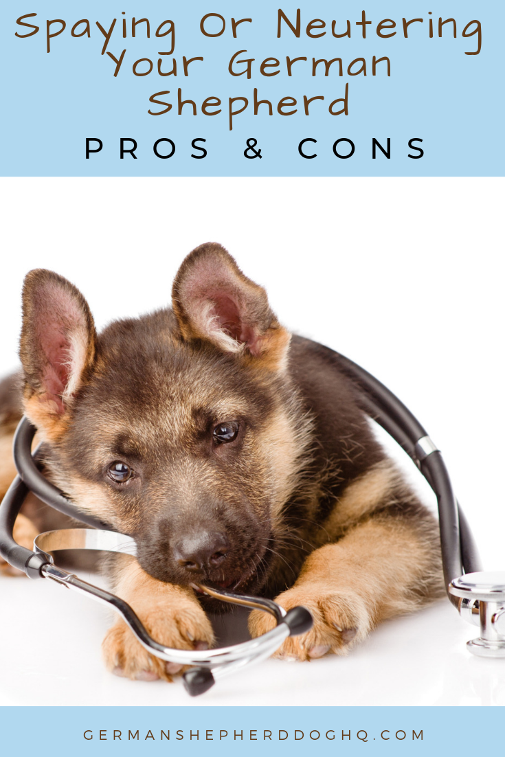Deciding Whether To Spay Or Neuter Your German Shepherd Is A Big Decision There Are Many Pros And Cons And Misc German Shepherd Female German Shepherd Neuter