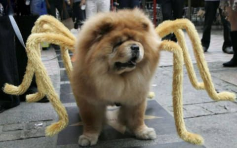 100 funniest dog costumes for halloween of all time animals best do it yourself halloween costumes for pets photos international business times solutioingenieria Image collections