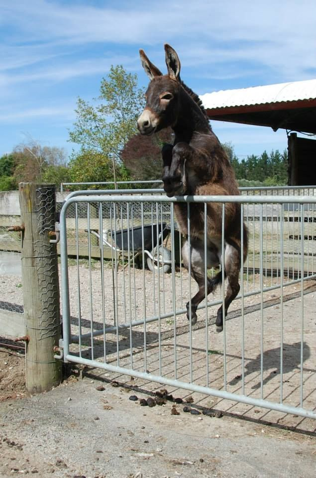 Born To Be Wild Wiiiiiilllddddd Donkey Hey If You
