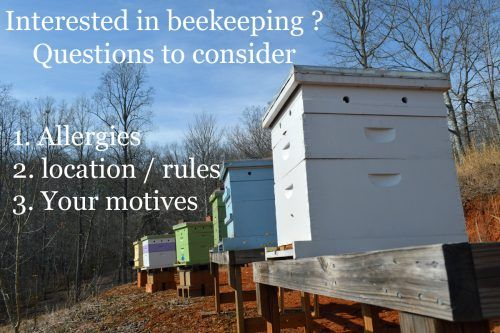 Do you have a good place for a beehive? Perhaps your ...