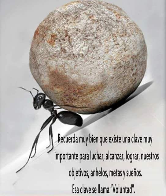 Imagenes Con Frases Cortas De Superacion Personal