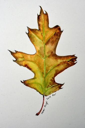 Watercolor Sketch Of Oak Leaf Watercolor Leaves Fall Watercolor