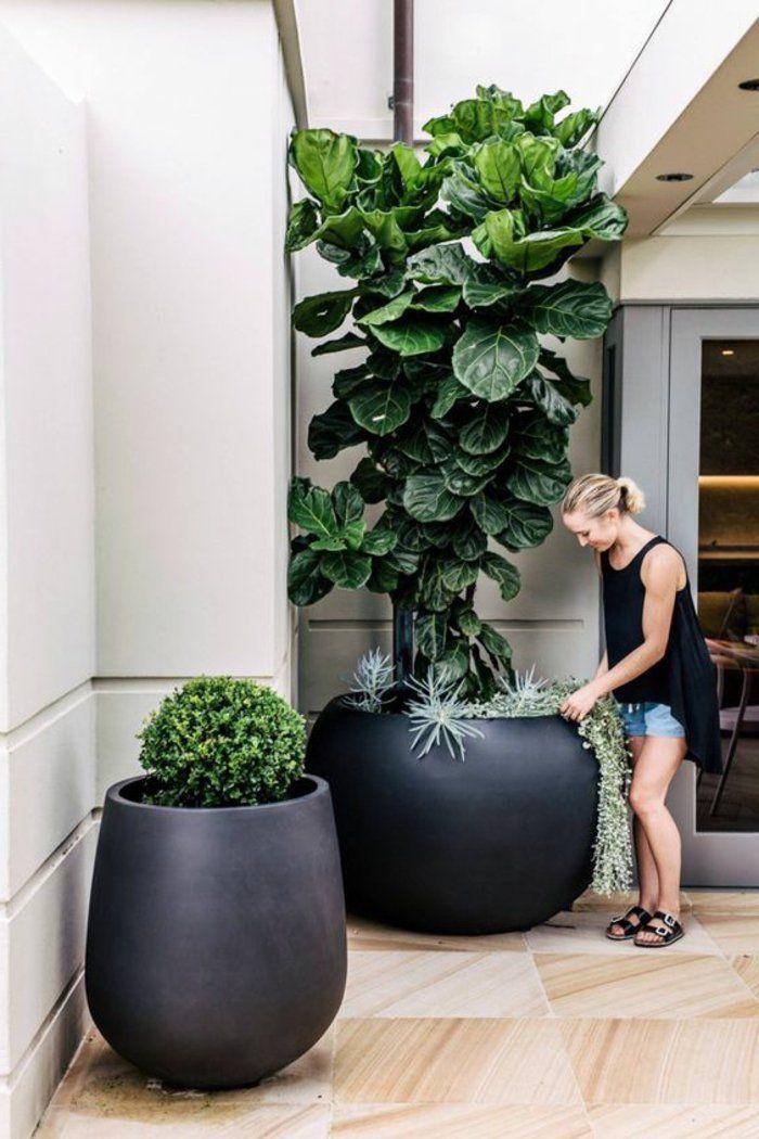 Pflanzkbel  Erst im richtigen Pflanzgef zeigen Pflanzen ihre natrliche Pracht  Dekoration
