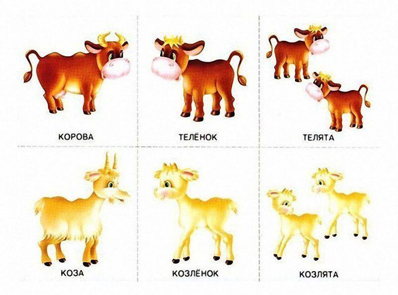 Мамы животные и их детеныши картинки для детей