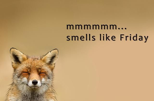 Image result for friday fox memes images