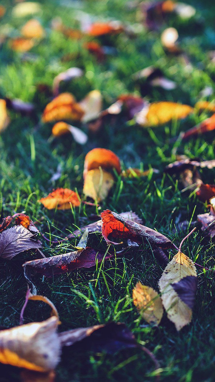 Autumn Leaf Floor Colorful iPhone 6 Wallpaper.jpg ٧٥٠×١ ...