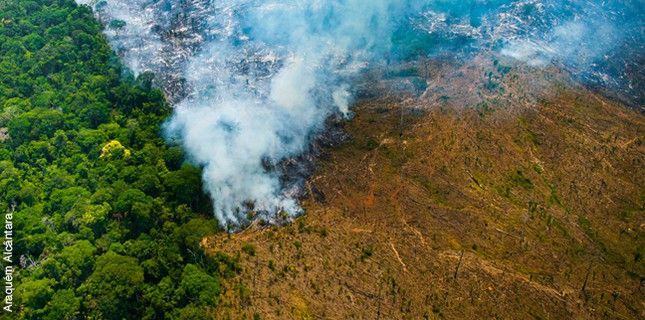 How Satellite Imagery Can Halt Deforestation Deforestation