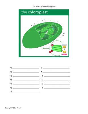 Chloroplast Diagram Quiz Application Wiring Diagram