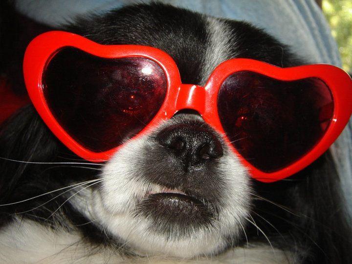 My precious puppy Diddy :)