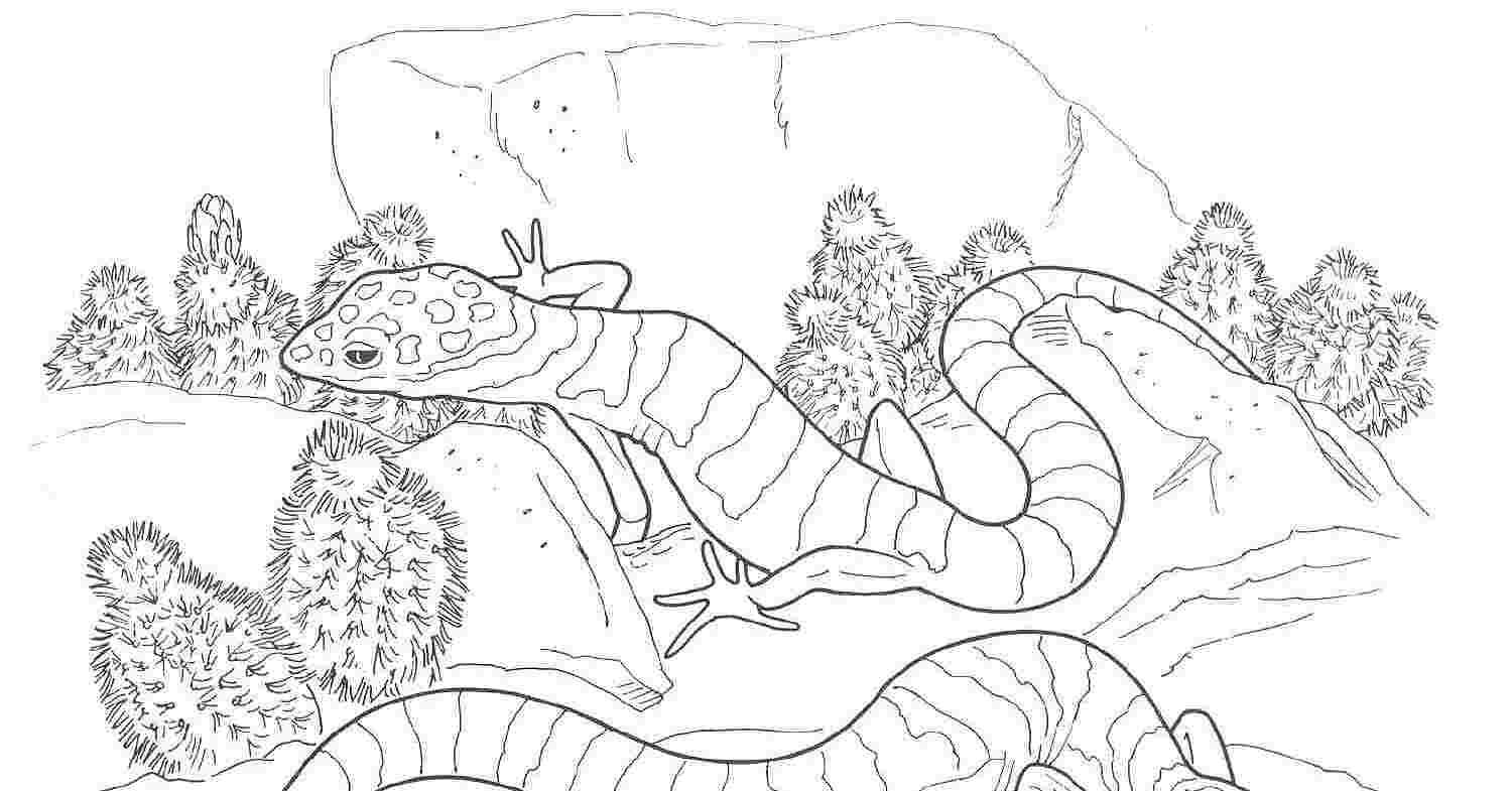 Desert Animals Coloring Pages Desertanimals