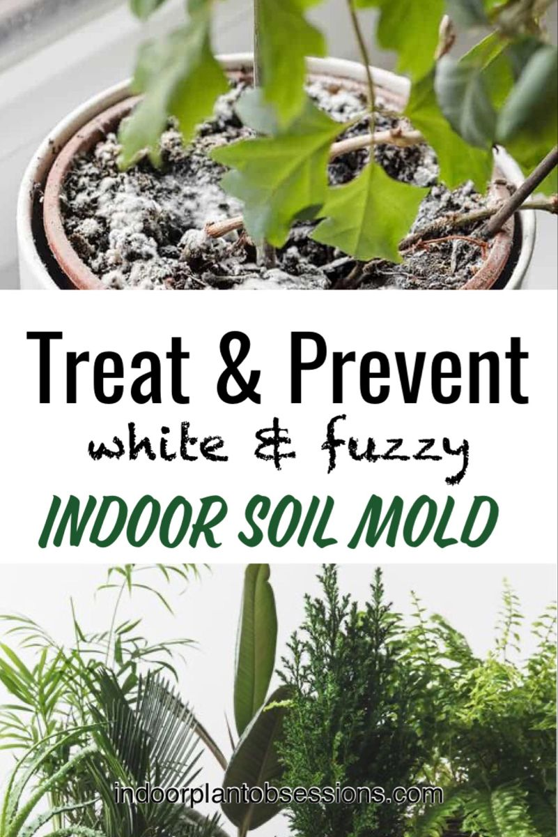 How To Get Rid Of White Mold On Seed Starting Soil Seed Starting Soil Seed Starting Seedlings Indoors
