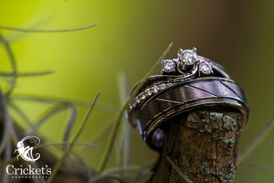 Wedding rings in a tree wwwcricketsphotocom Crickets Photography