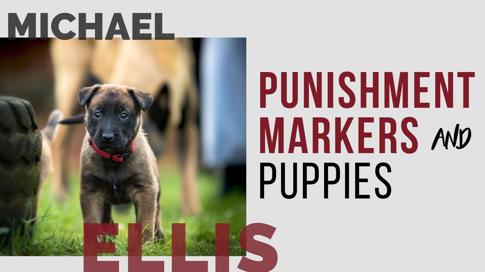 In This Video Michael Ellis Discusses Using Punishment Markers