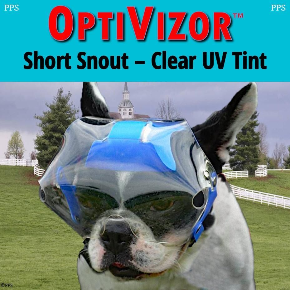 OptiVizor Short Snout Version Clear UV Tint Bichon