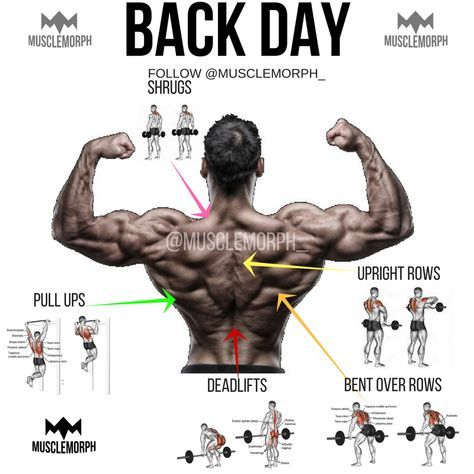 back day back exercise back workout gym bodybuilding